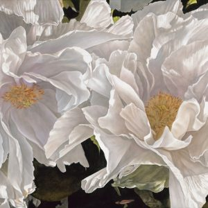 large realistic painting of two white flowers, anemone