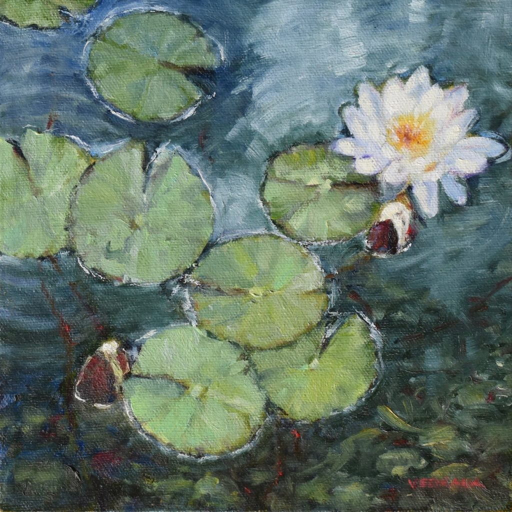 Small Impressionist study of white water lily welcoming two new buds into the world