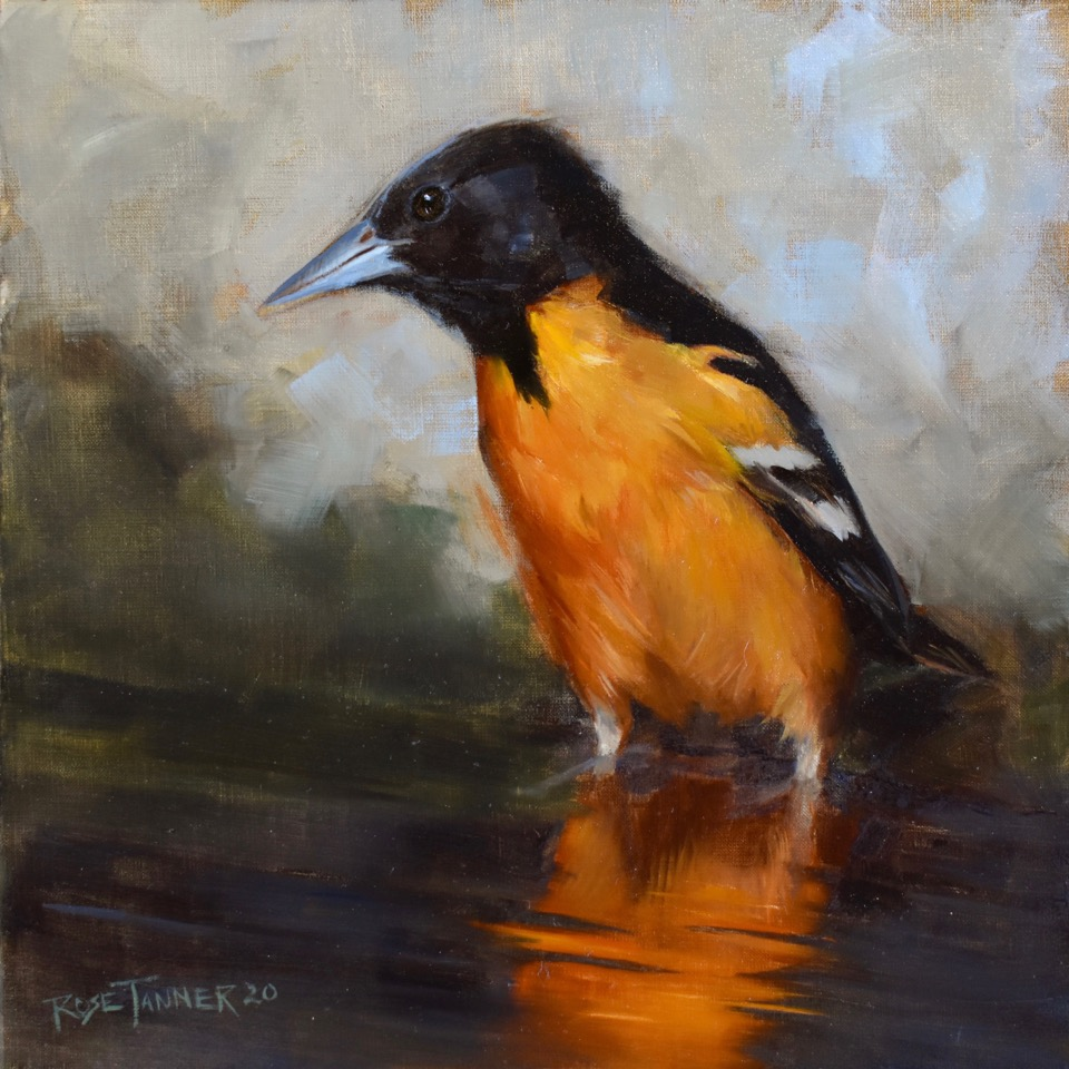 Rose Tanner, Baltimore Oriole in Sunset, 10 x 10