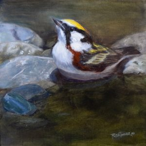 Rose Tanner, Chestnut Sided Warbler, 10 x 10